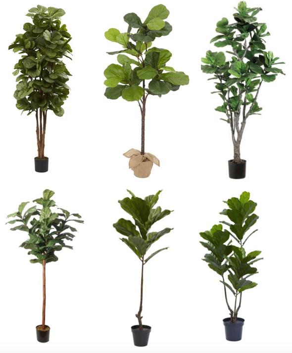 Faux Fiddle Leaf Fig Trees Danielle Oakey Interiors